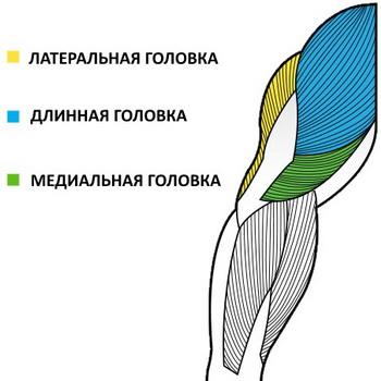 kak-nakachat-ogromnye-tricepsy-2