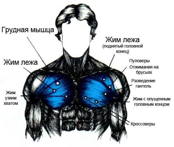 Выборочный тренинг груди