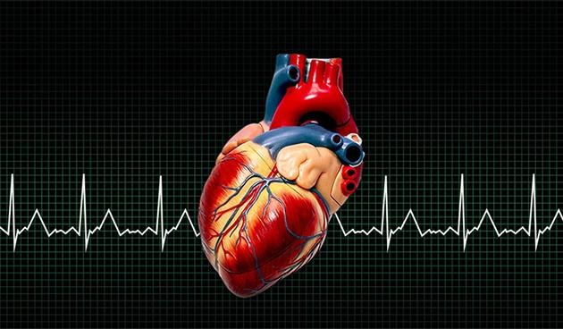 Сердце: ваша главная мышца