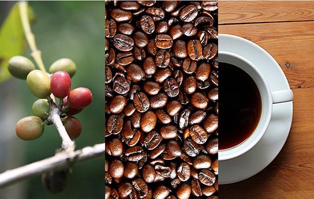 8-populyarnyx-istochnikov-kofeina-klyuchevye-otlichiya-5