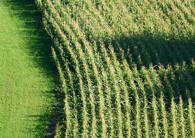 что нужно знать о ГМО