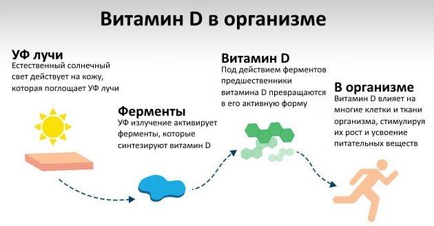 Витамин D: полное руководство